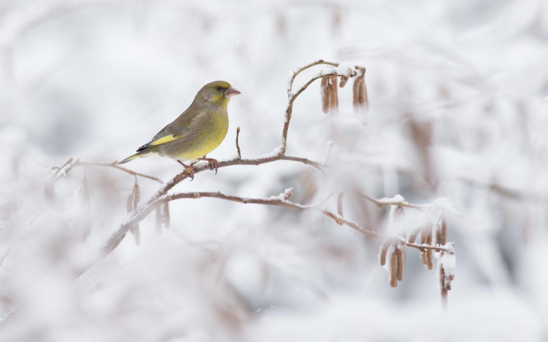 A téli erdő titkai