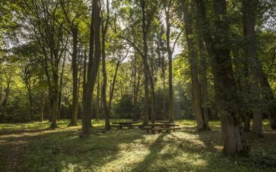 Nemzetközi tanulmányi verseny – Fiatalok Az Európai Erdőben 2020