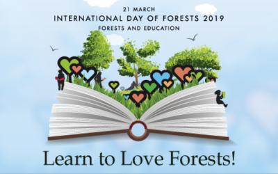 Tanulj, hogy tudd szeretni az erdőt!